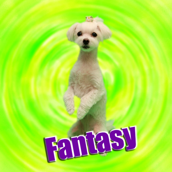 Fantasy_3