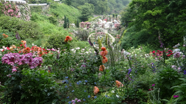 Valley_of_roses