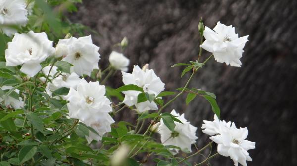 Akibara6