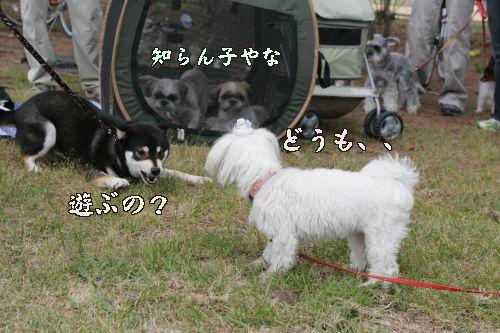 Kyo3_1